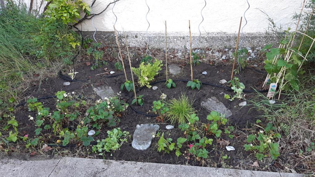 Naschgarten der Jugend an der Seite der Stephanuskirche im Frühjahr mit verschiedenen Obst und Gemüsepflanzen