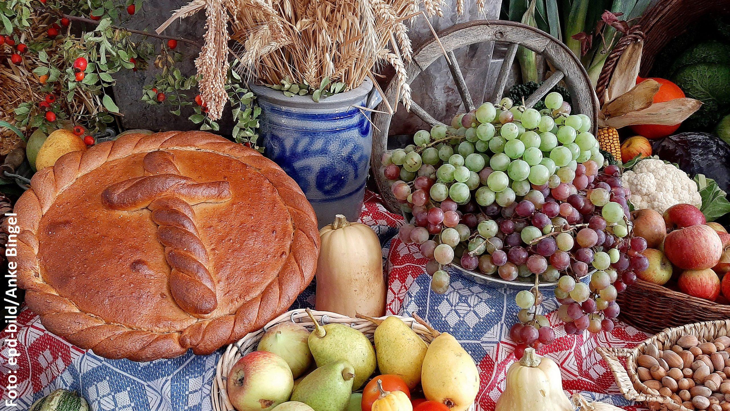 Verschiedene Erntedankgaben wie Brot, Weizen, Weintrauben, Äpfel und Birnen, Kürbisse, Nüsse auf einer Decke zusammengestellt