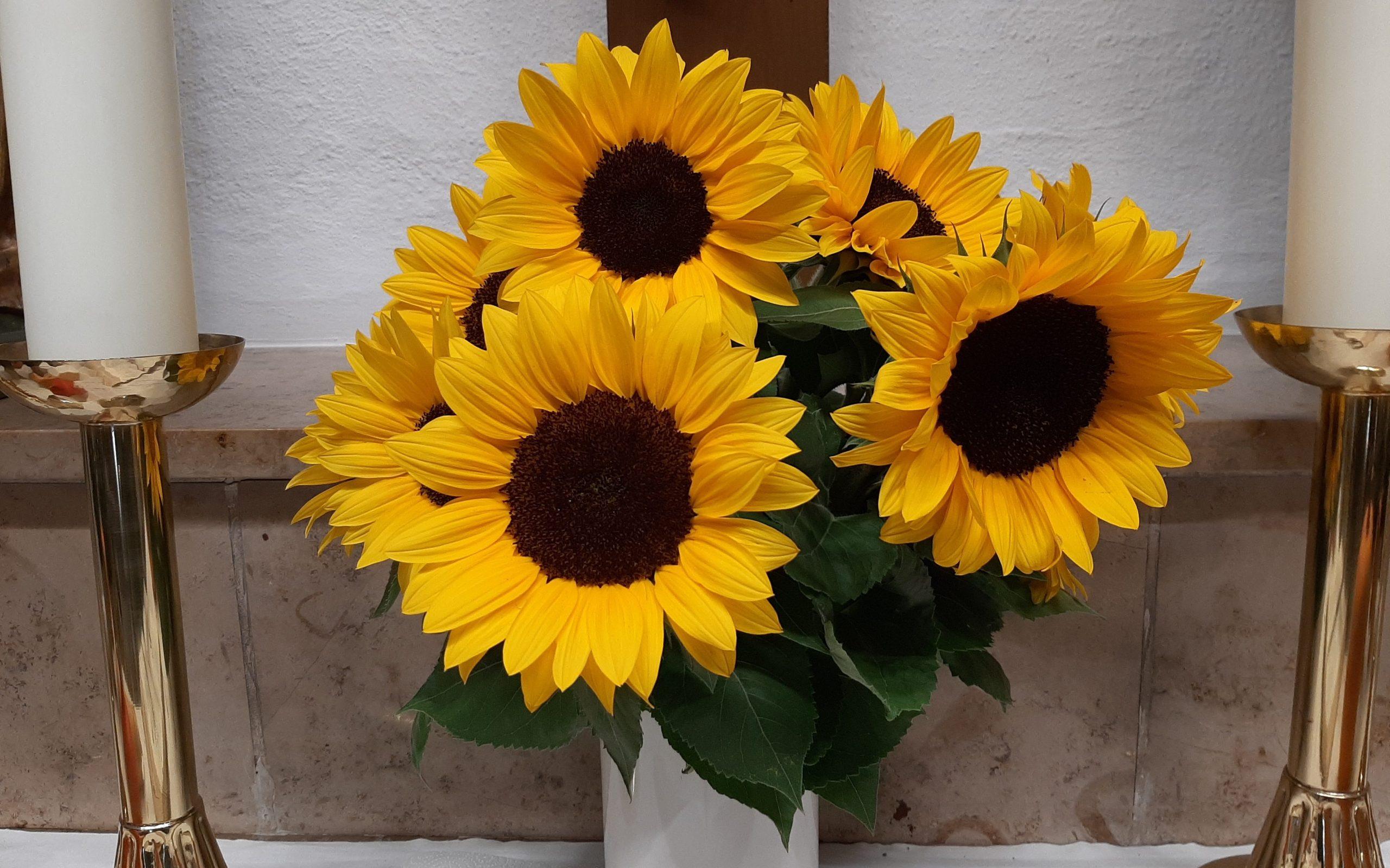 Sonnenblumen am Altar der Stephanuskirche